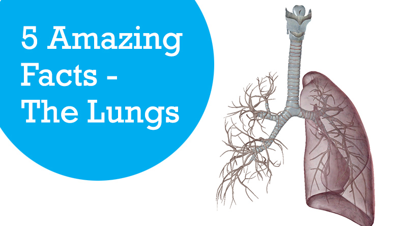 5 Amazing Facts - The Lungs
