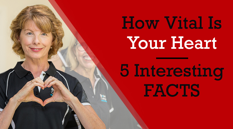 How Vital Is Your Heart –  5 Interesting Facts About Your Heart